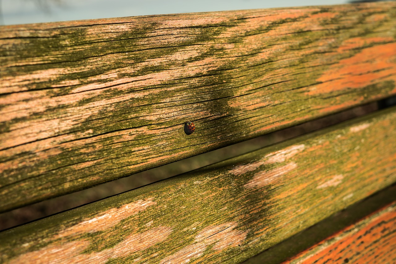 ladybug,bank,summer,orange,summer lighting,rest,break,sit,park bench,recovery,bench,seat,out,garden bench,resting place,click,recover,relax,wood,wooden bench,nature,close,free pictures, free photos, free images, royalty free, free illustrations, public domain
