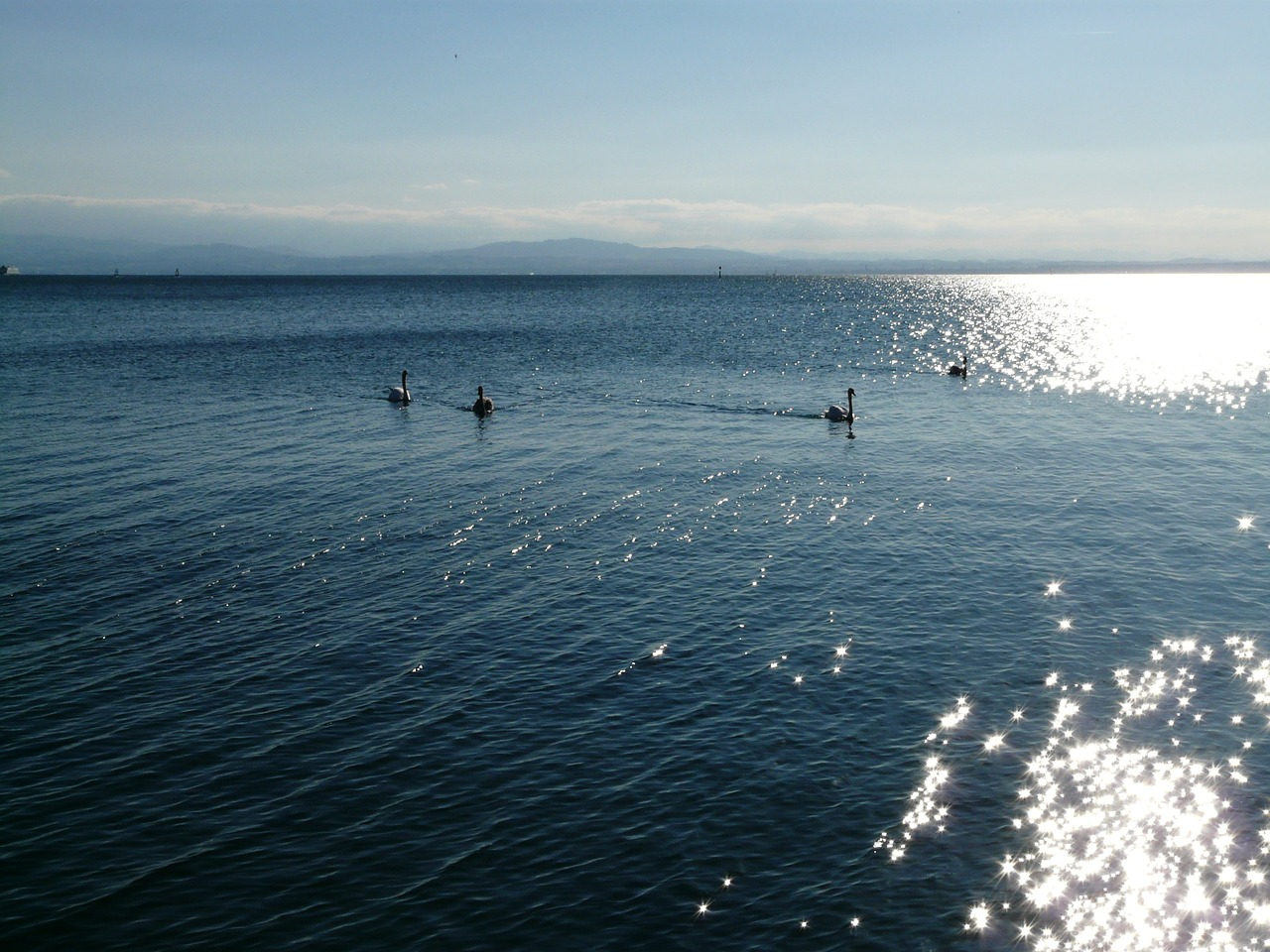lake lake constance waters free photo
