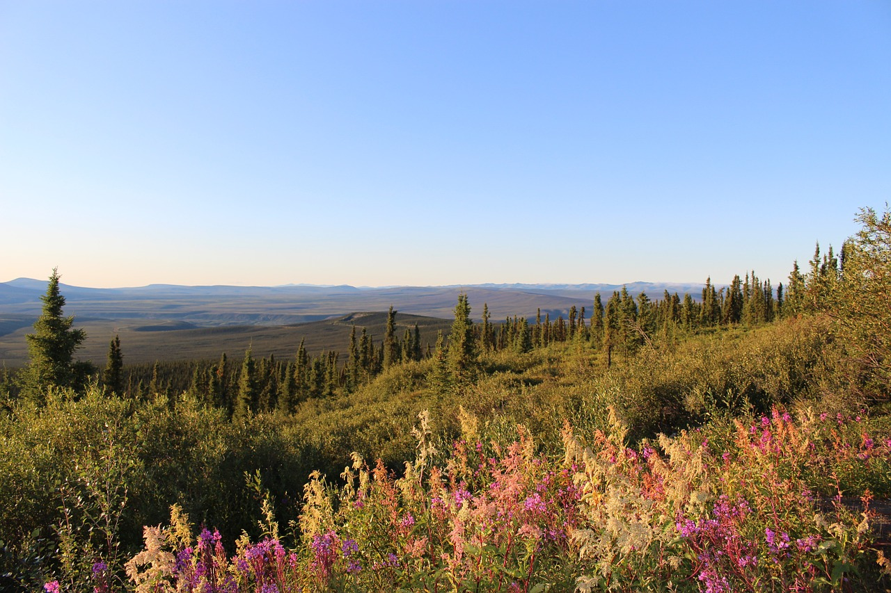 landscape dempster highway eagle plains free photo