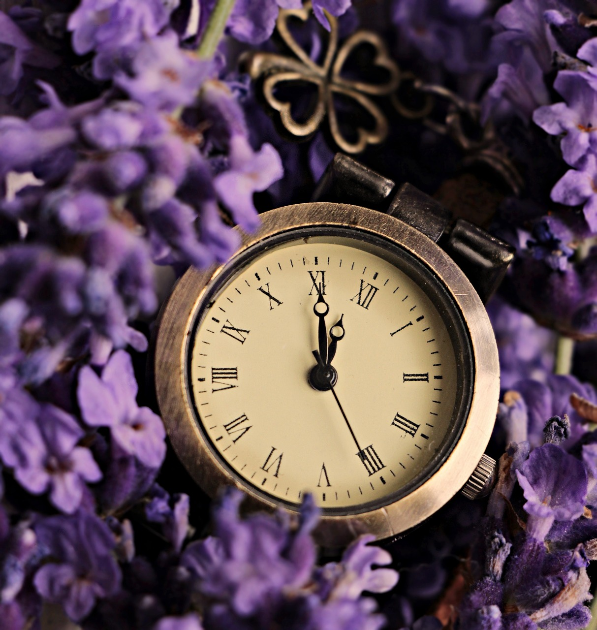 lavender  clock  lucky clover free photo