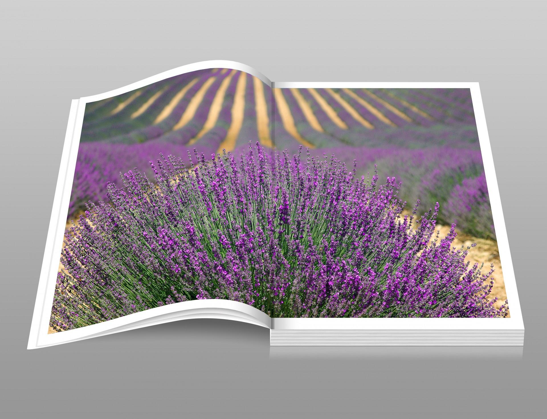 「photobook europe」の画像検索結果