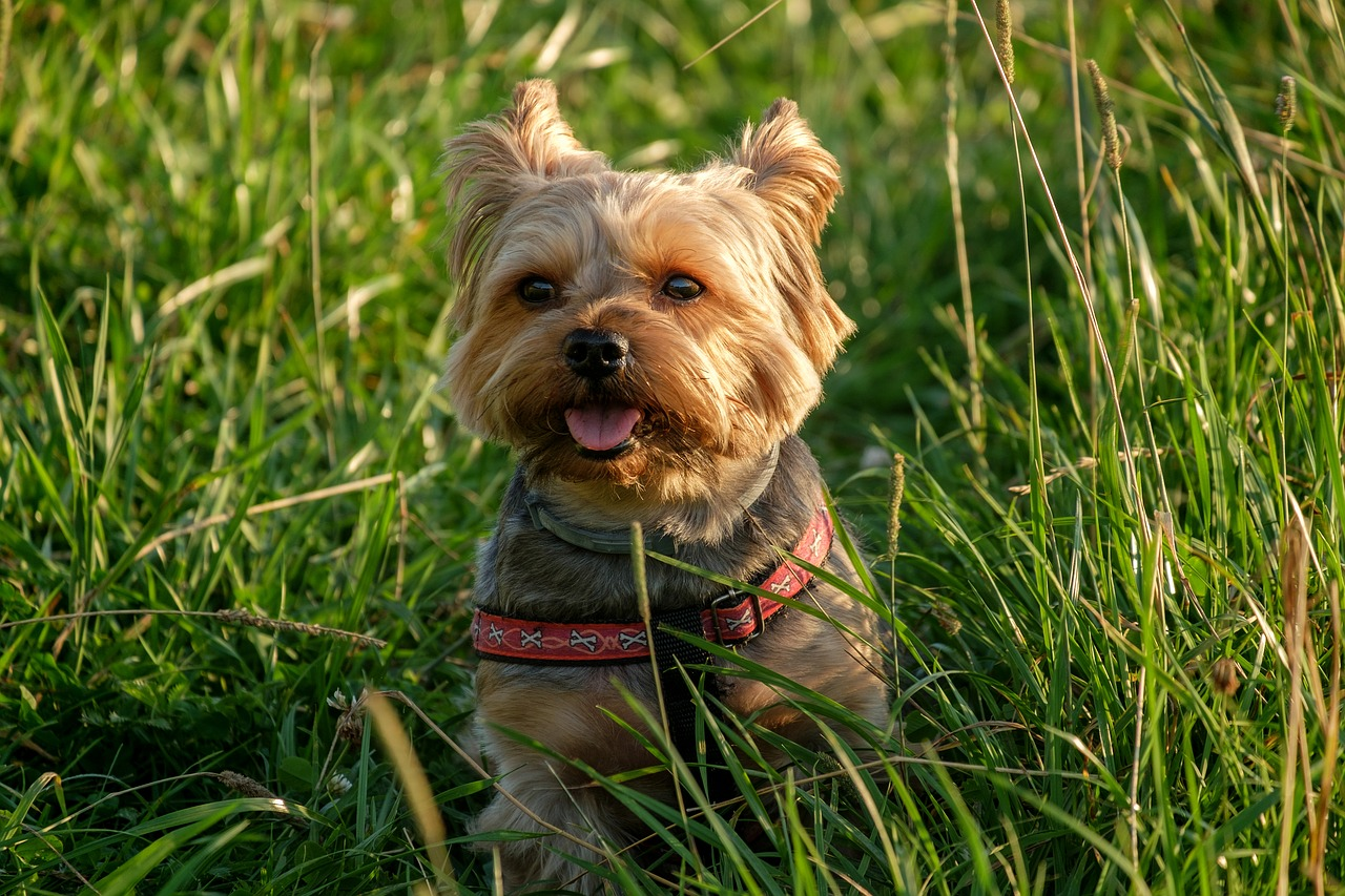 Lawn,a little,animals,charming,nature - free photo from