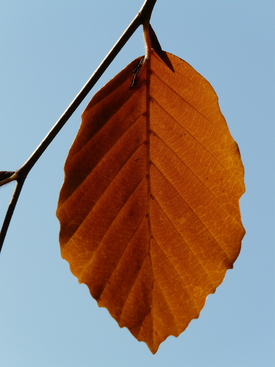 leaf loneliness alone free photo