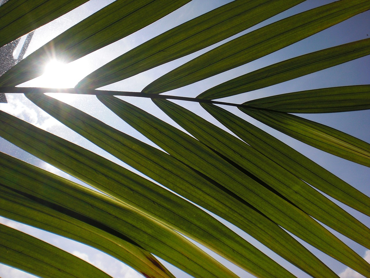 leaf,light,sun,sky,meditation,background,free pictures, free photos, free images, royalty free, free illustrations, public domain