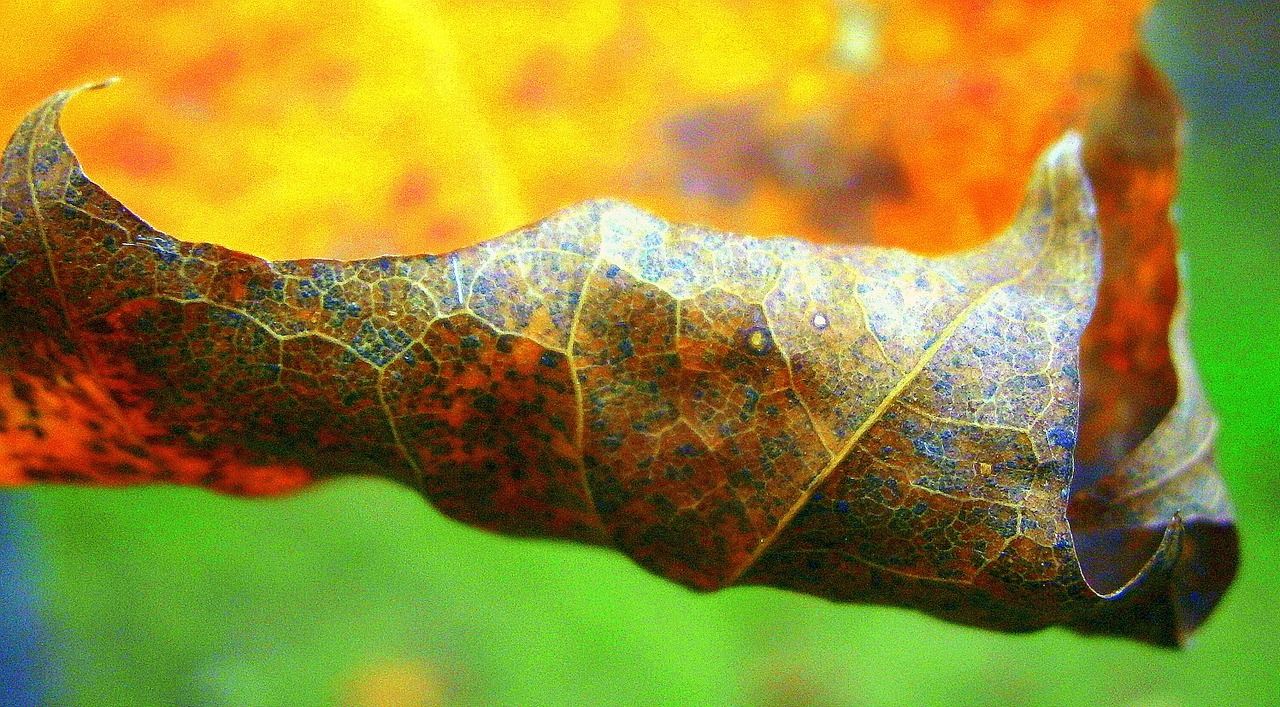 leaf autumn leaf colorful free photo