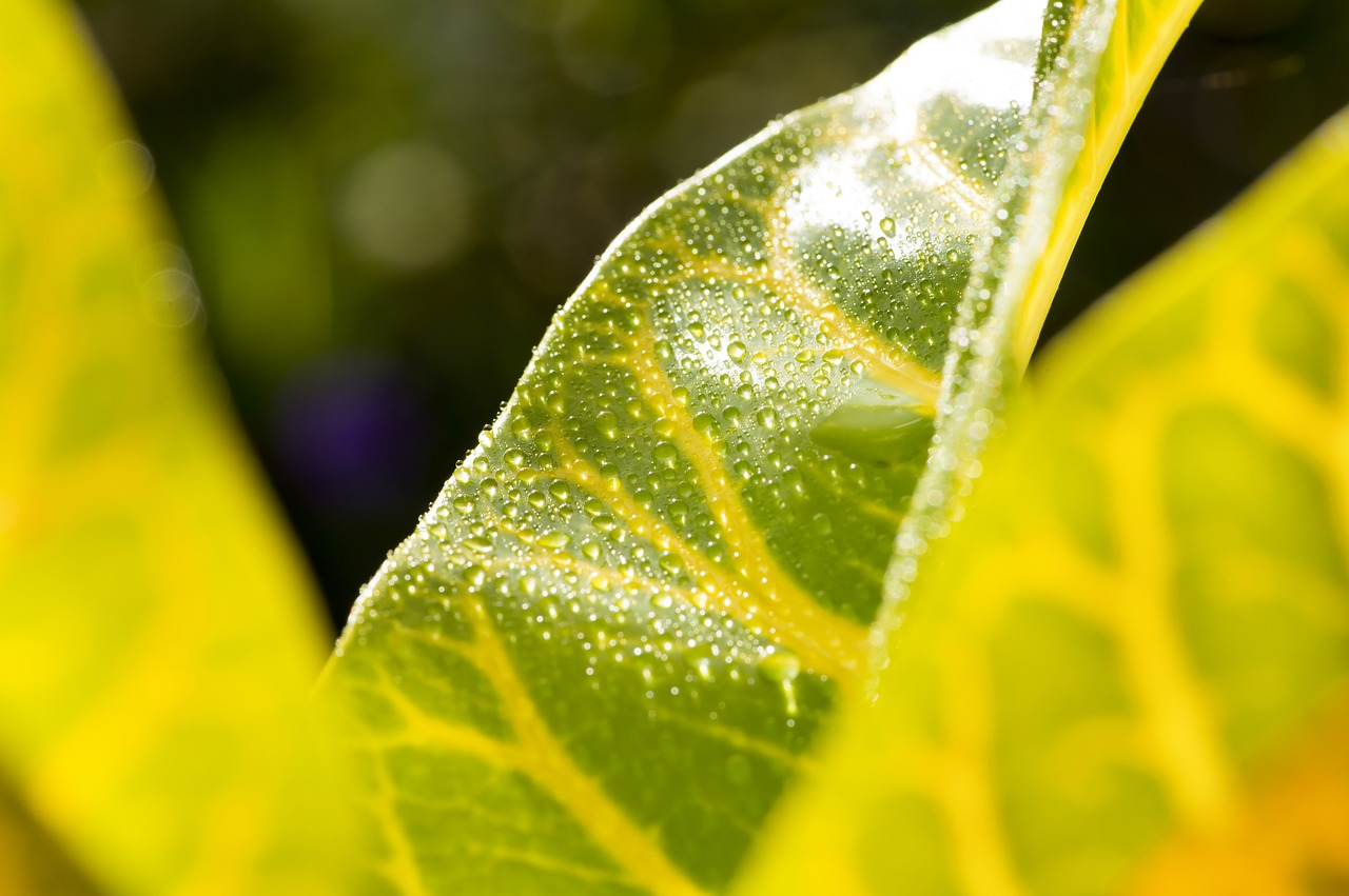 leaf,macro photography,tropical,wet,free pictures, free photos, free images, royalty free, free illustrations, public domain