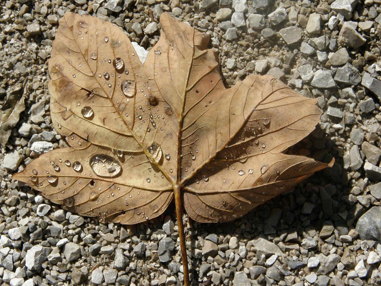 leaf,autumn,water,stone,free pictures, free photos, free images, royalty free, free illustrations, public domain