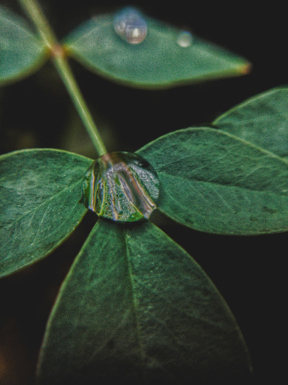 leaf nature droplet free photo