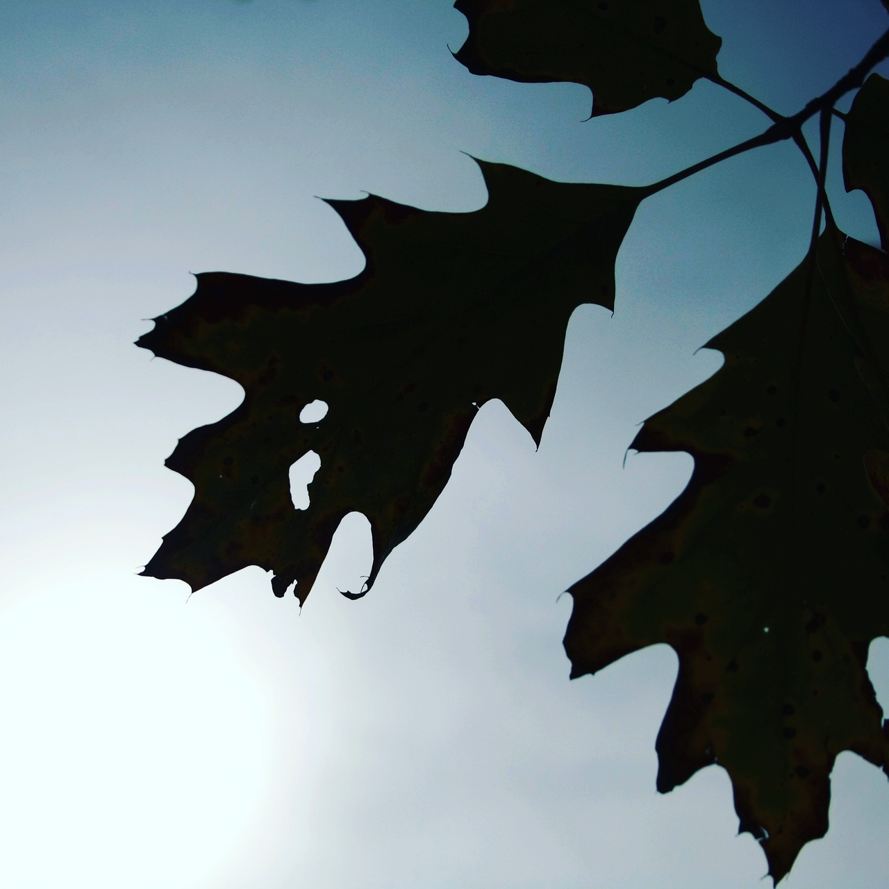 leaf leaves autumn free picture