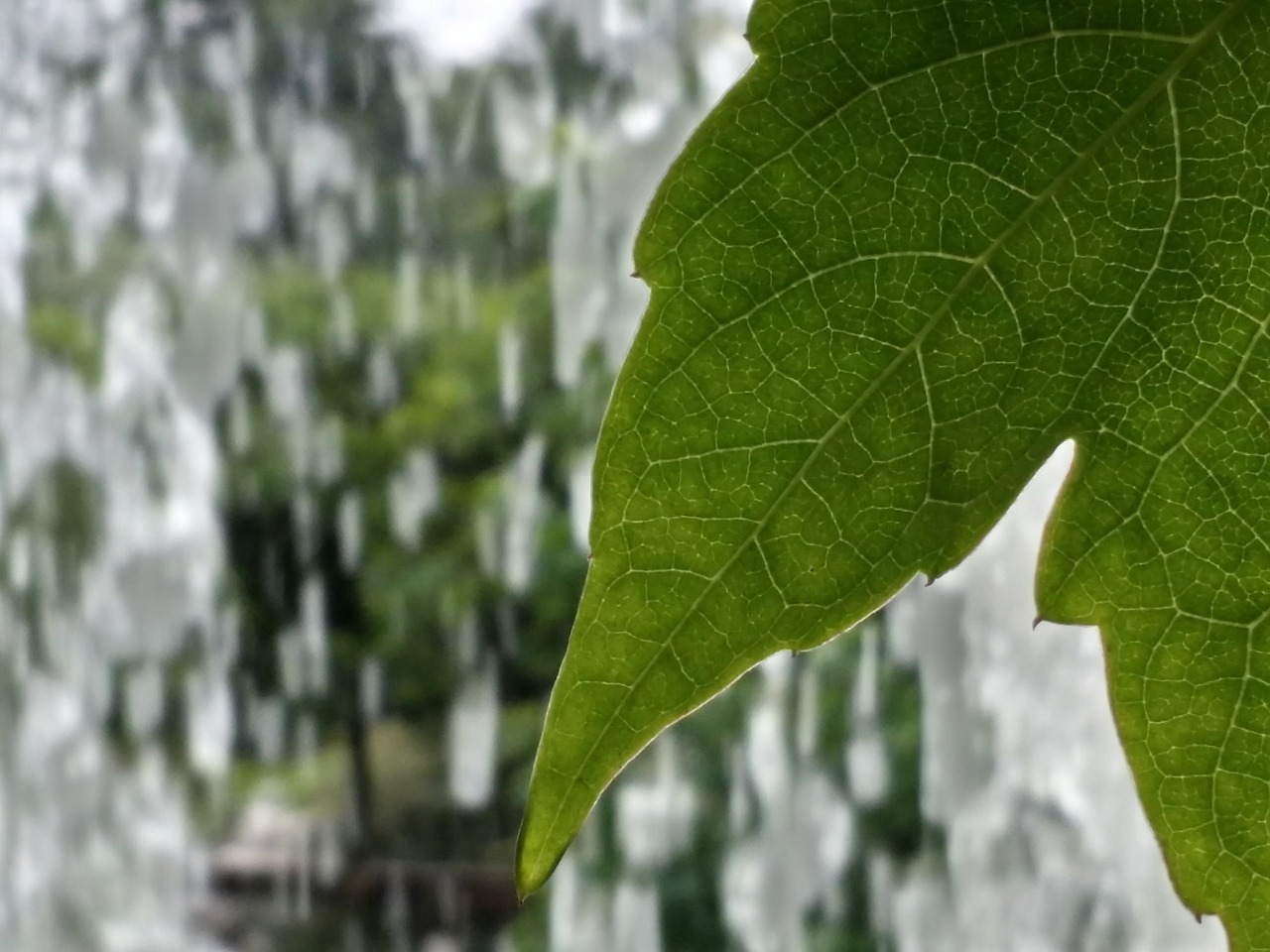 leaf nature waterfalls free photo