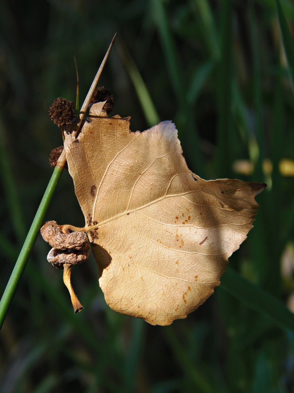 leaf dry leaf autumn free photo
