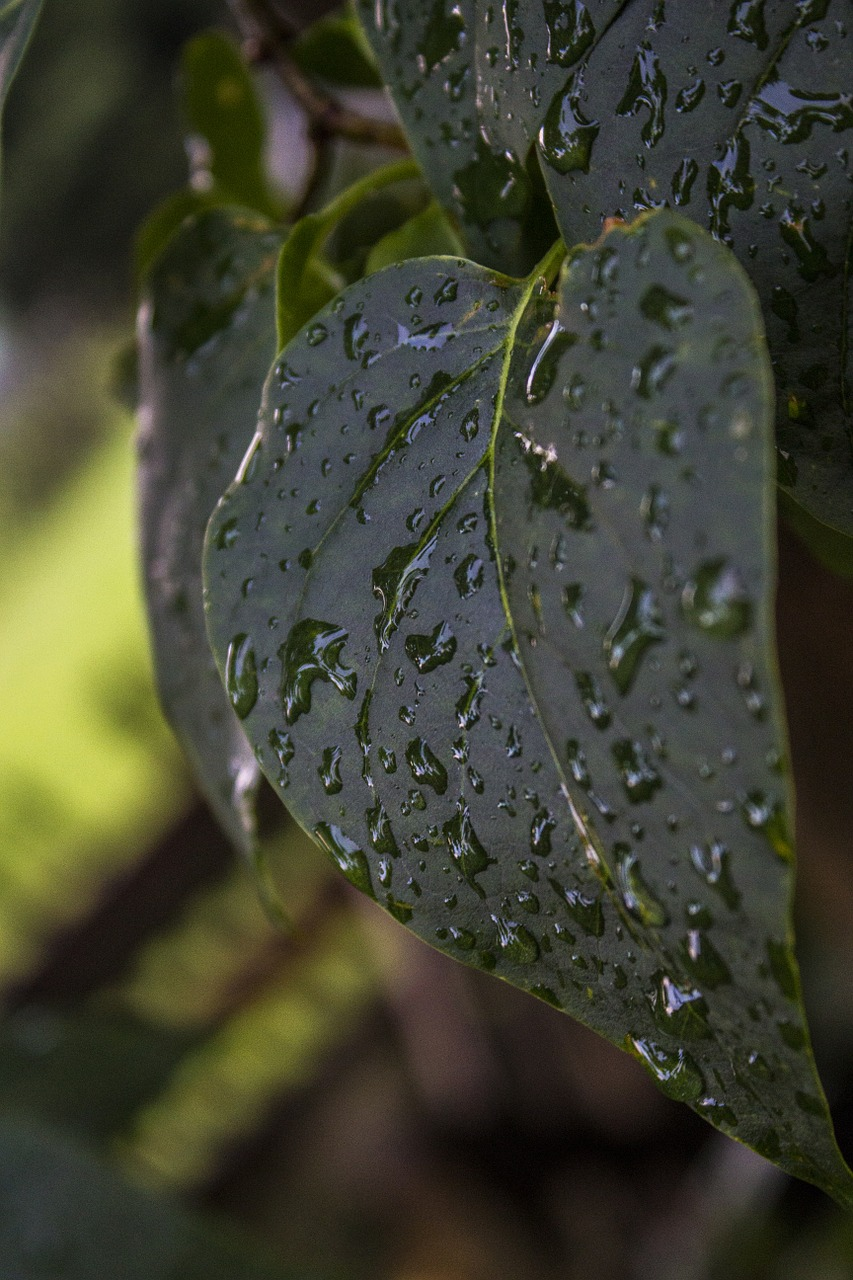 leaf wet rain free picture