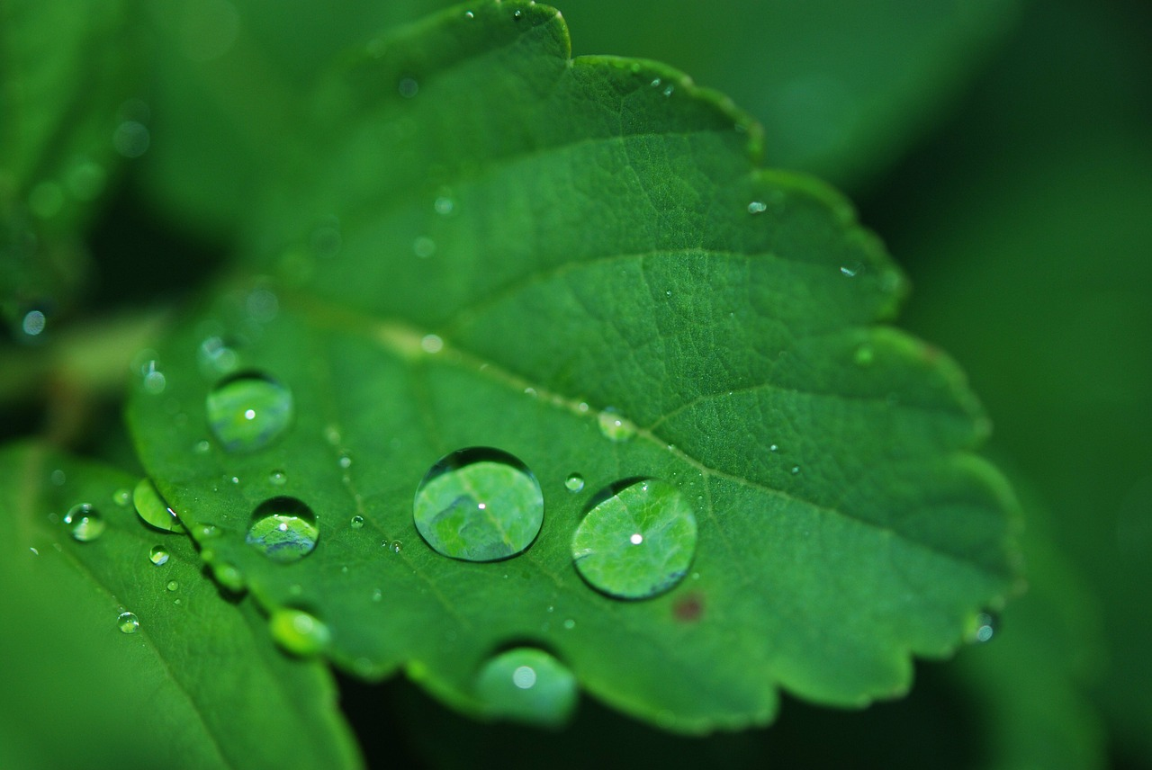leaf droplet water free photo