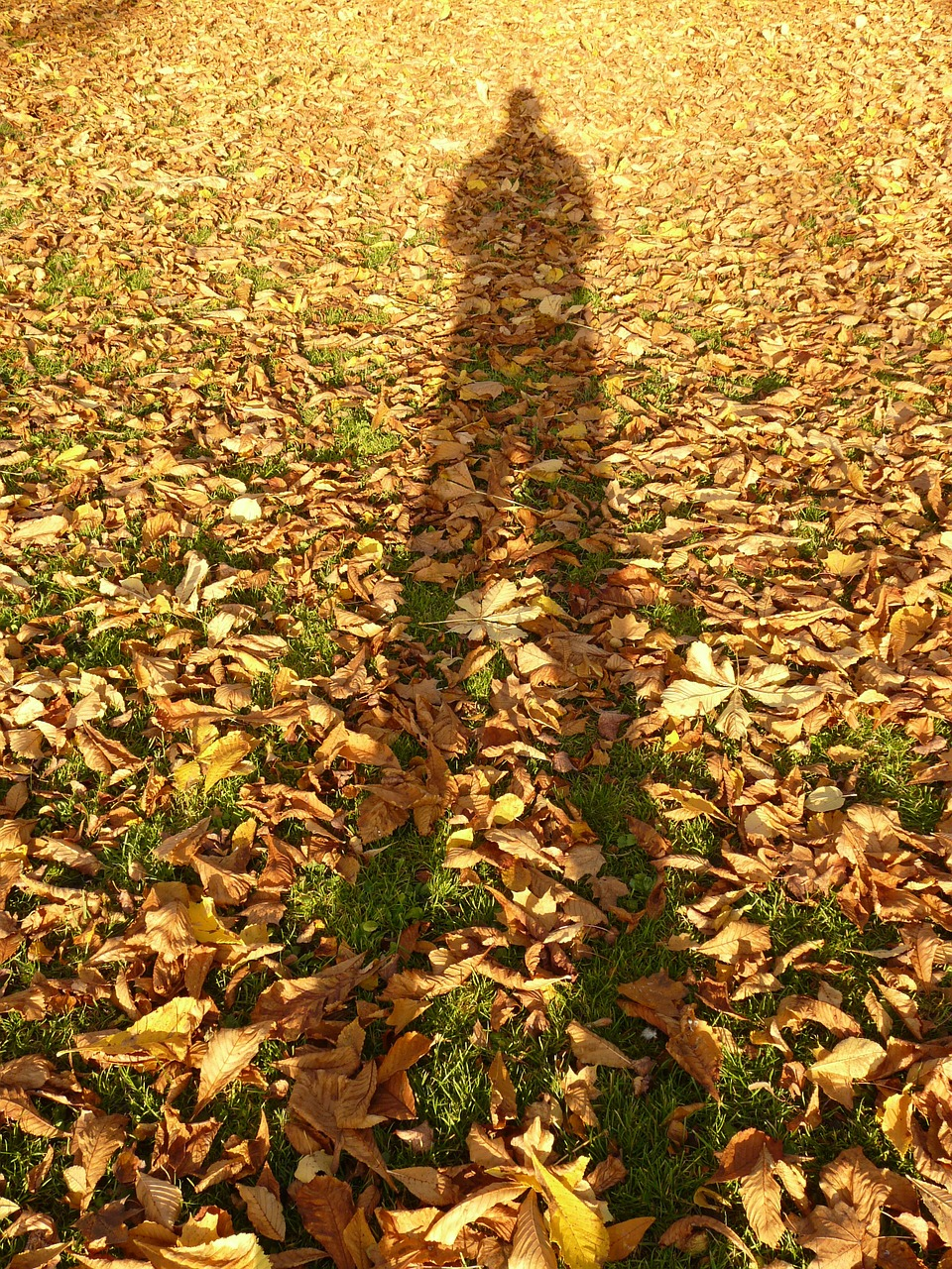 leaves autumn shadow free photo