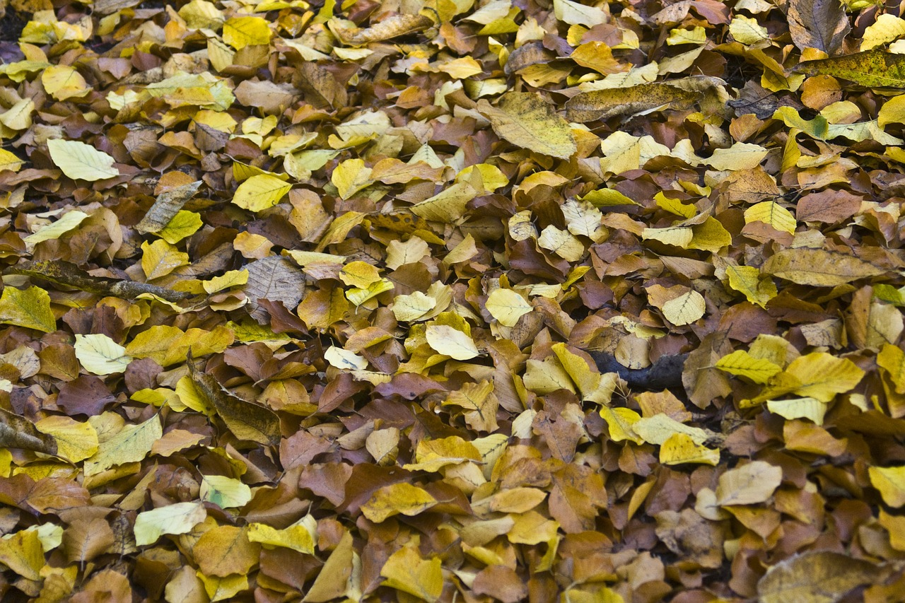 leaves autumn emerge free photo