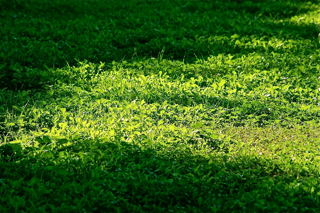 leaves green vegetable free photo