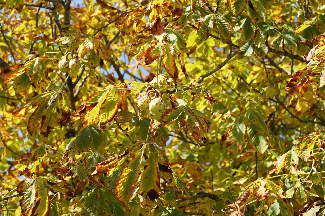 leaves tree autumn free photo