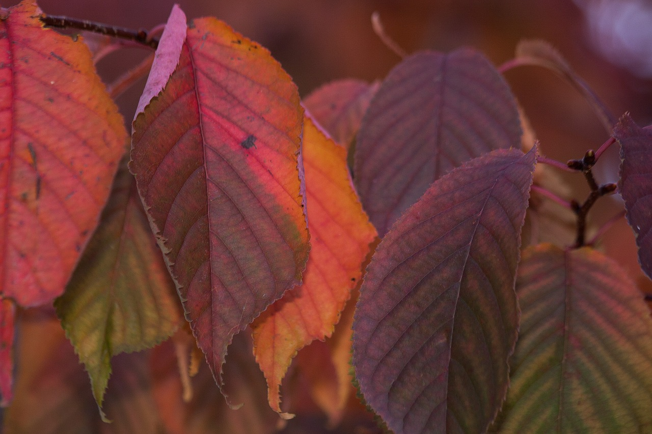 leaves colorful color free photo