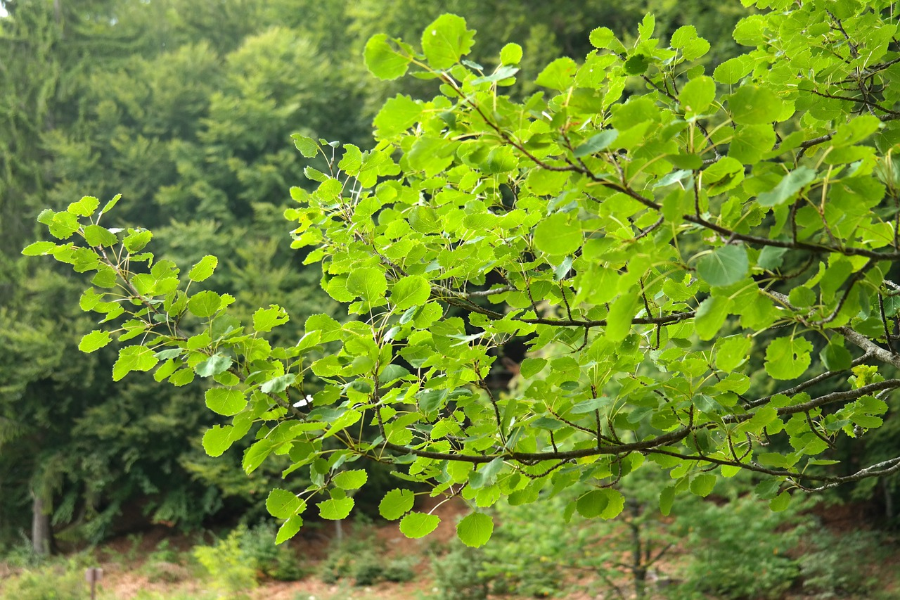 leaves foliage tree free photo