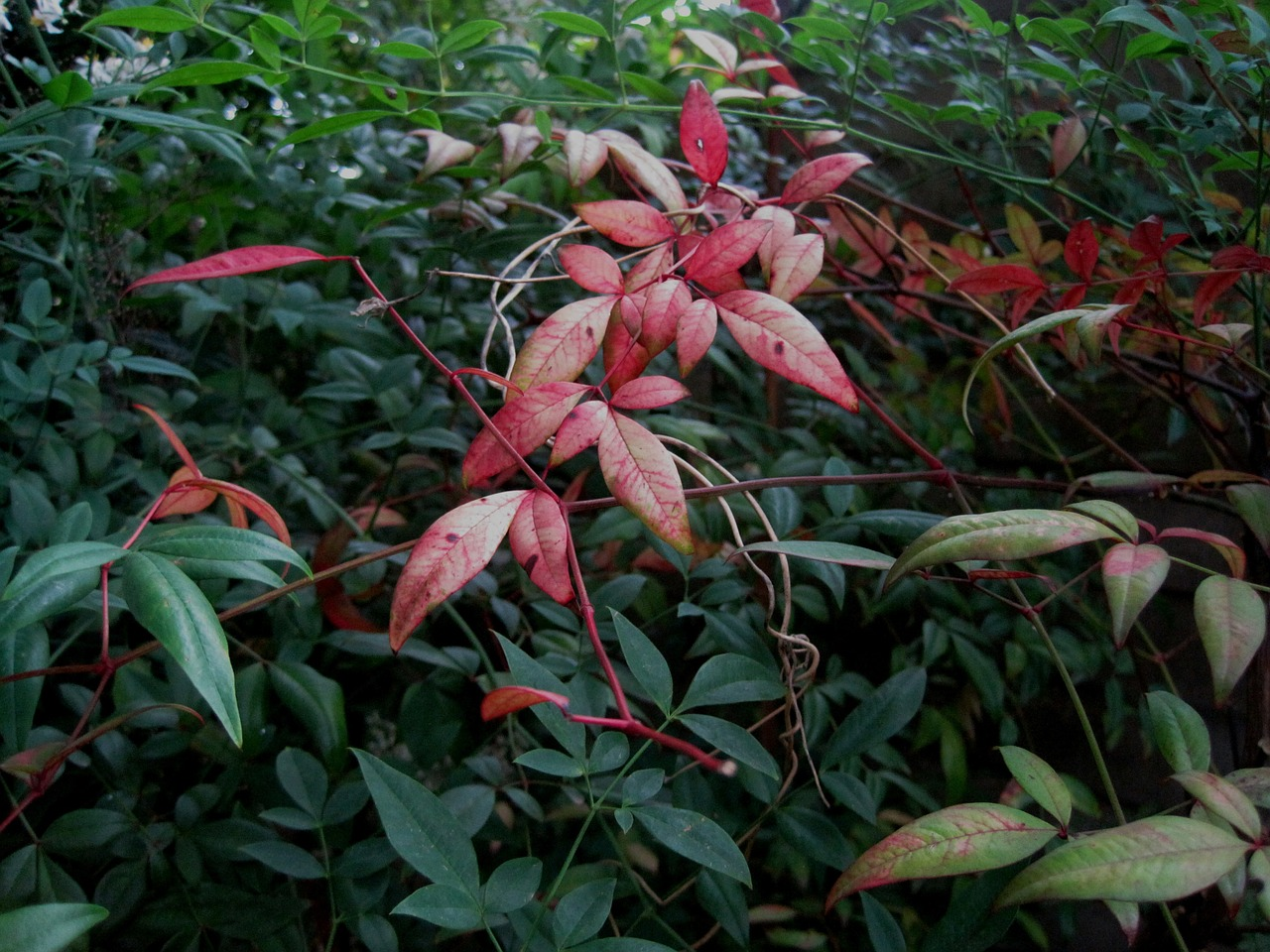 leaves oblong clump free photo