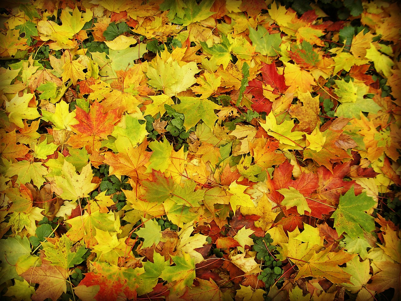 leaves forest autumn free photo