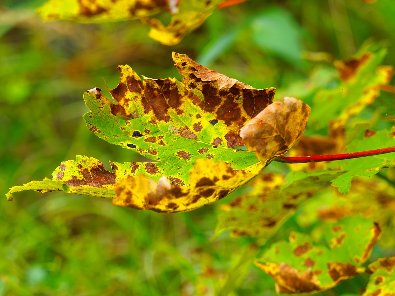 Leaves,colors,fall colors,nature,colors fall - free photo from ...