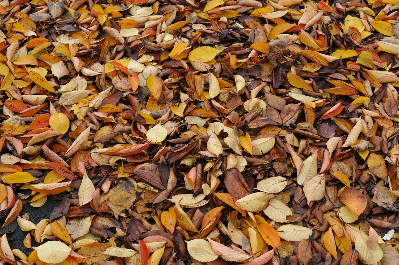 leaves autumn dried leaves free photo