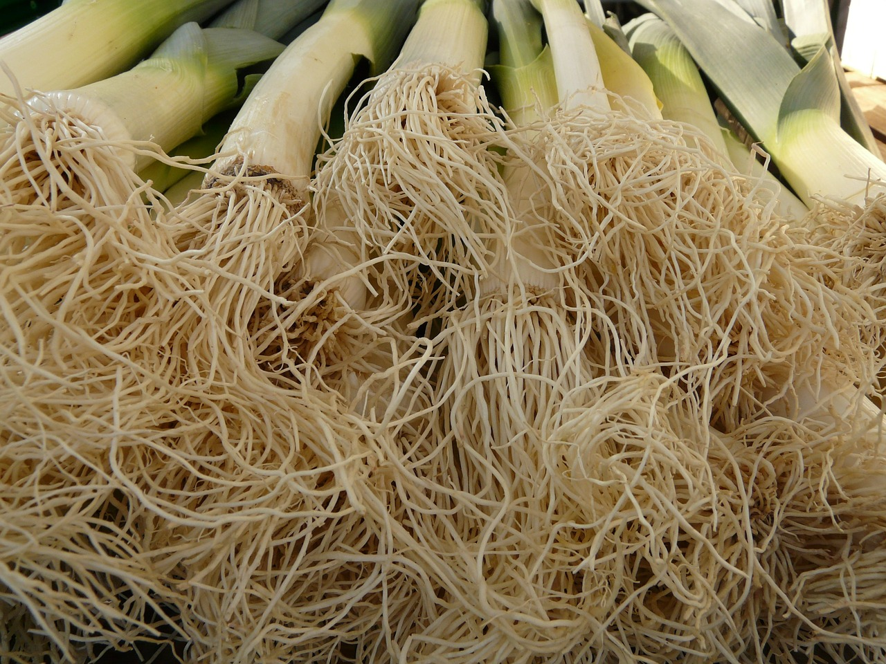 leek vegetables root free photo