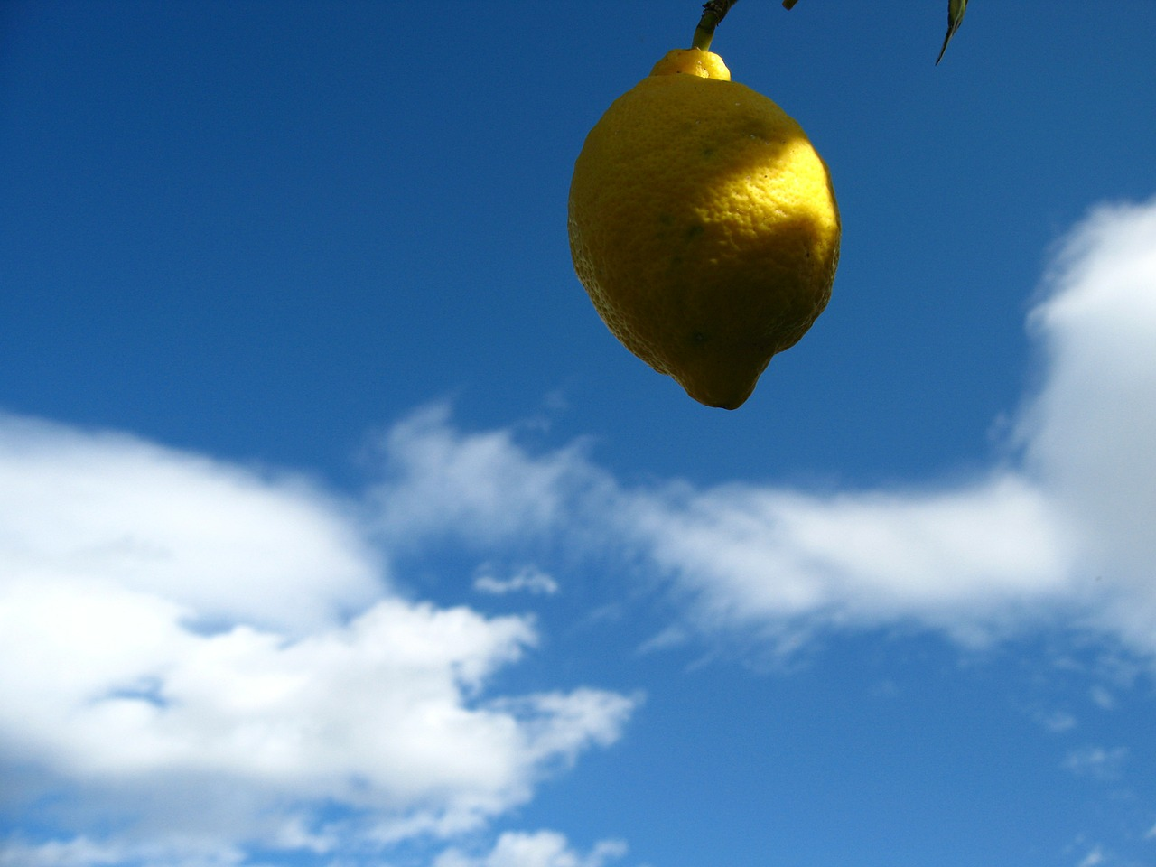 lemon citrus spain free photo