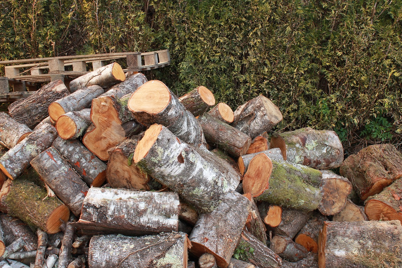 lena winter cut firewood free photo