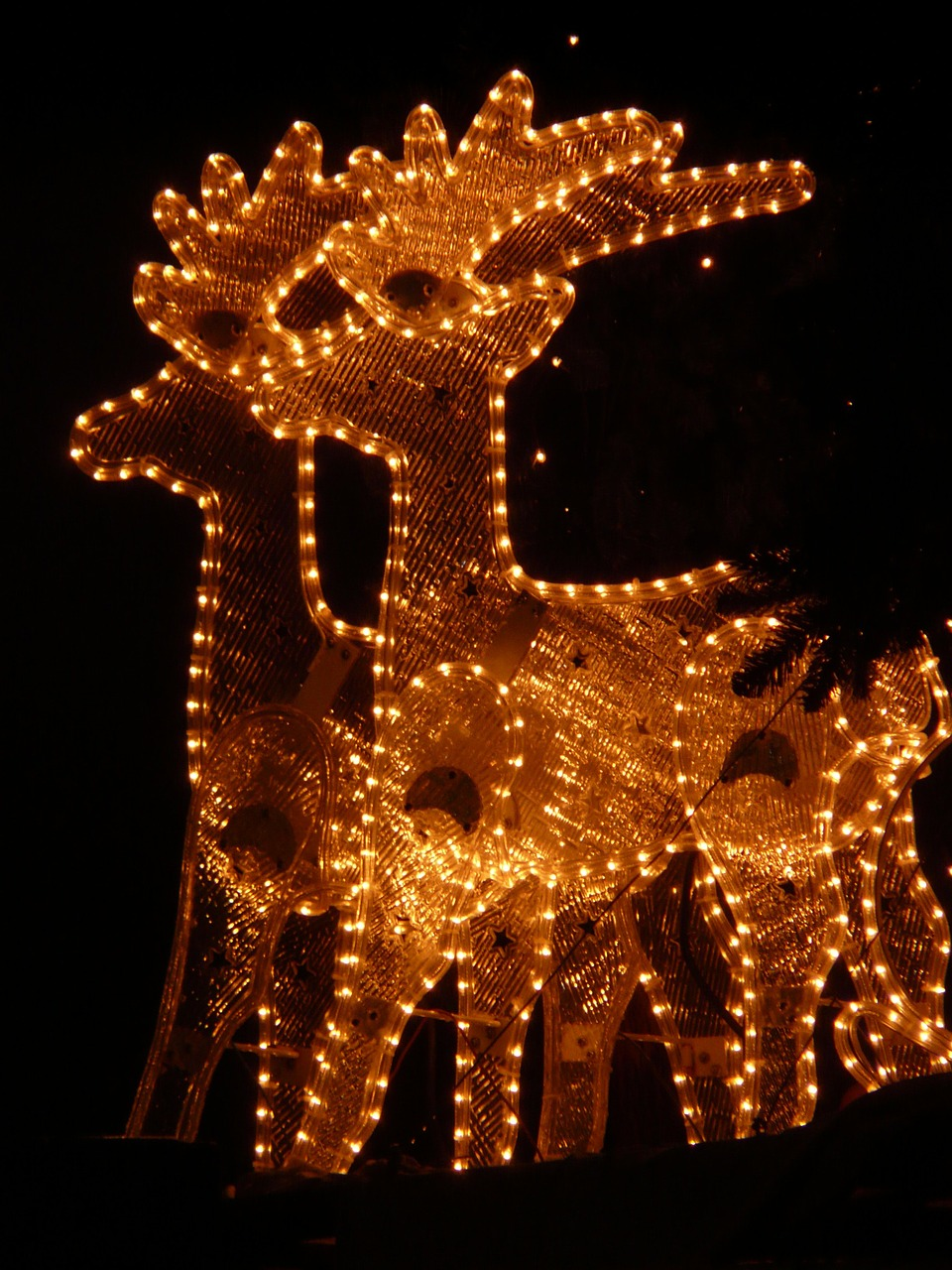 lichterkette christmas reindeer free photo
