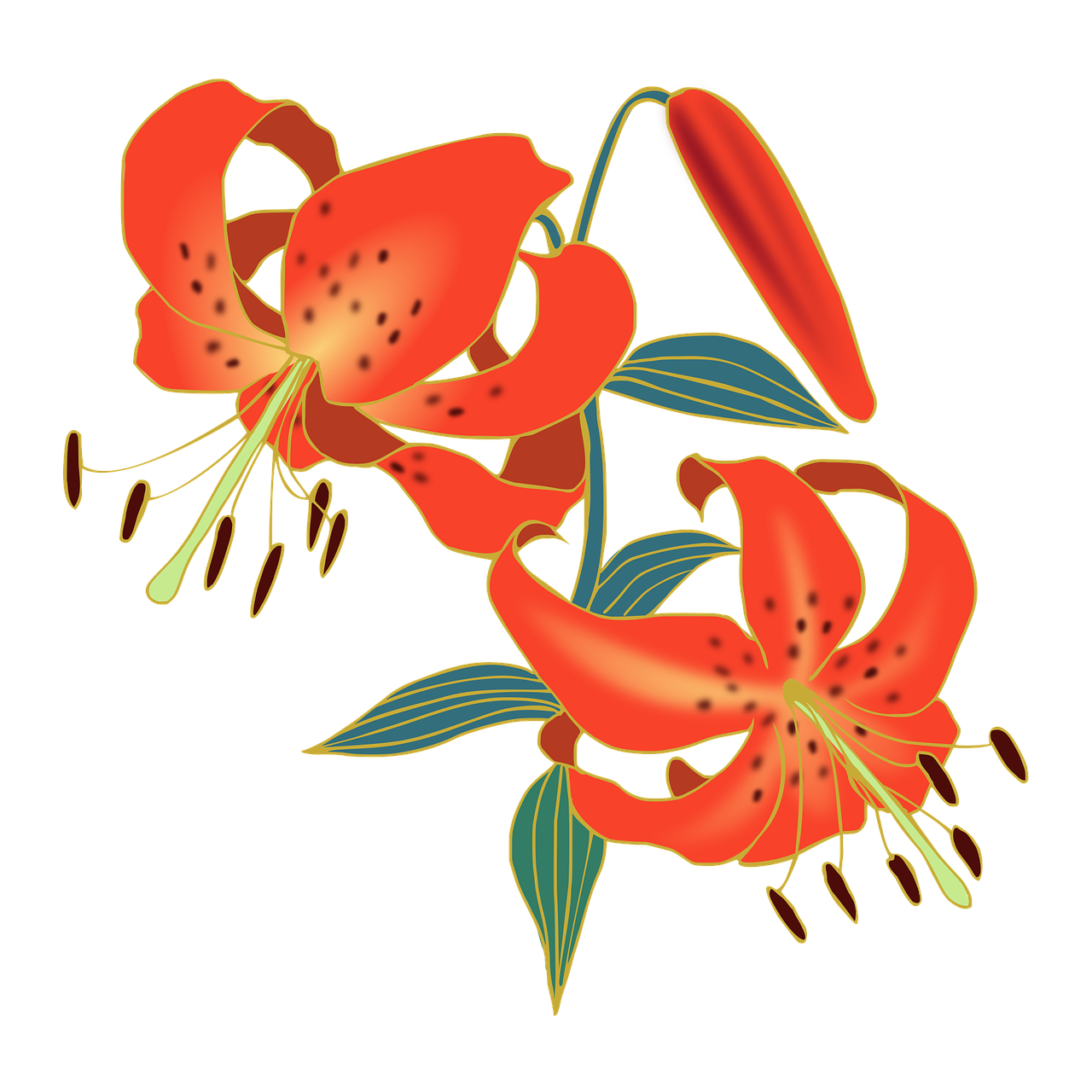 Lily Tiger Lily Flowers Red Free Pictures Free Image From