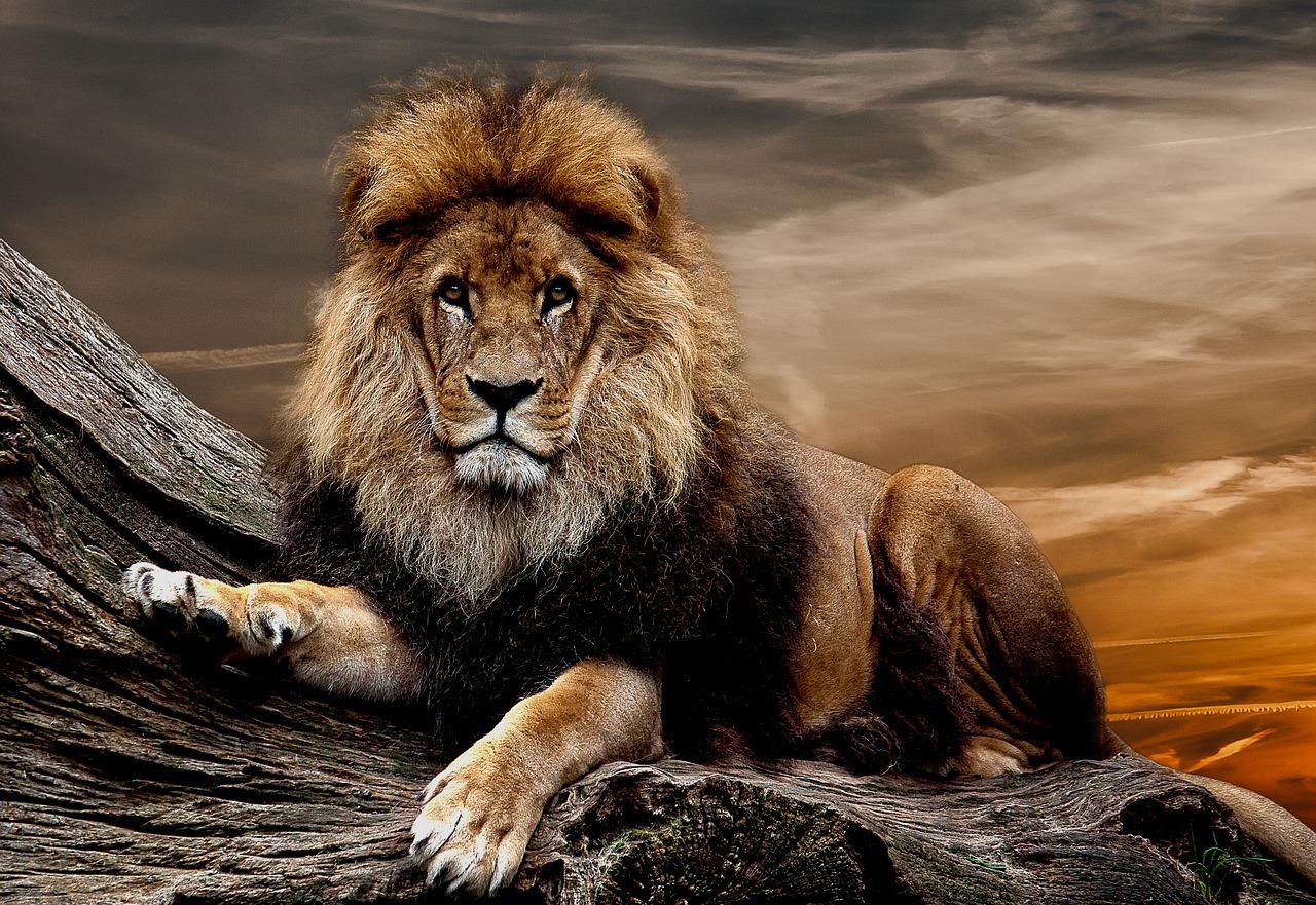 Фото высокого качества львы на фон телефона грим