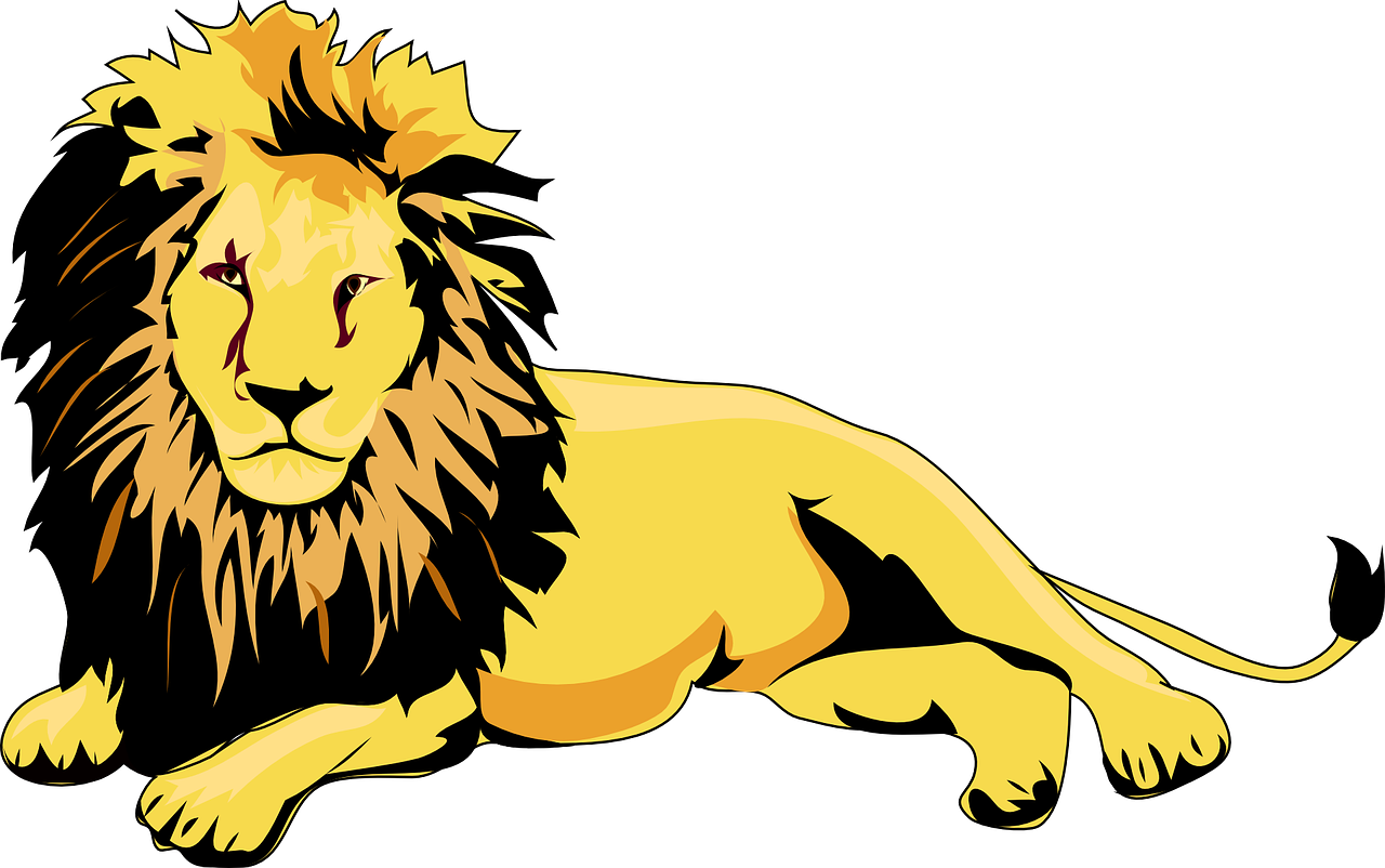 lion animal brown free photo