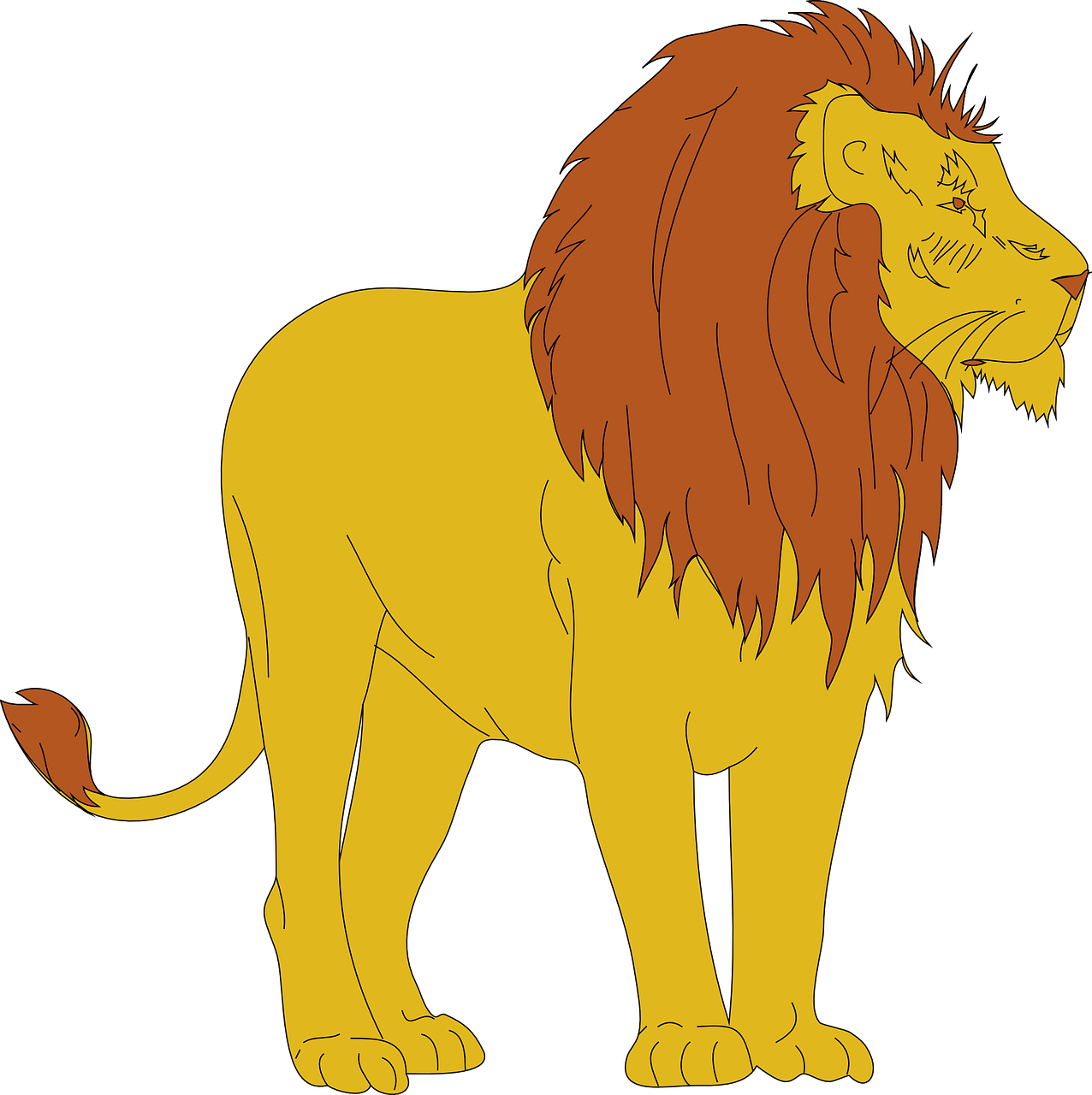 lion,animal,mammal,standing,looking,away,wildlife,dangerous,predator,kingjungle,forest,strong,powerful,free vector graphics,free pictures, free photos, free images, royalty free, free illustrations, public domain