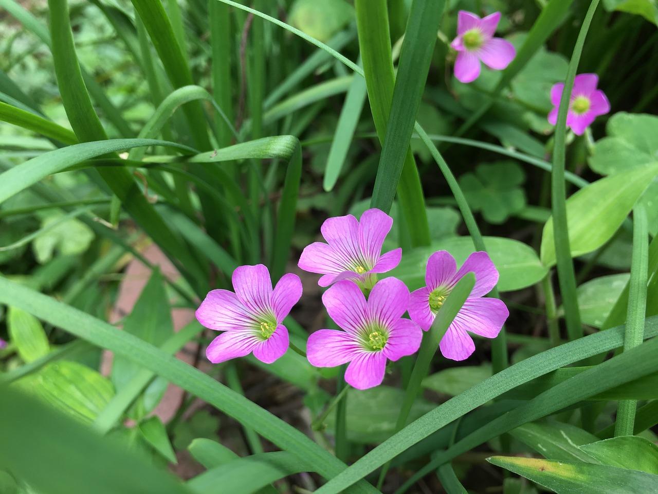 Littlepinkflowers Free Photo From Needpix