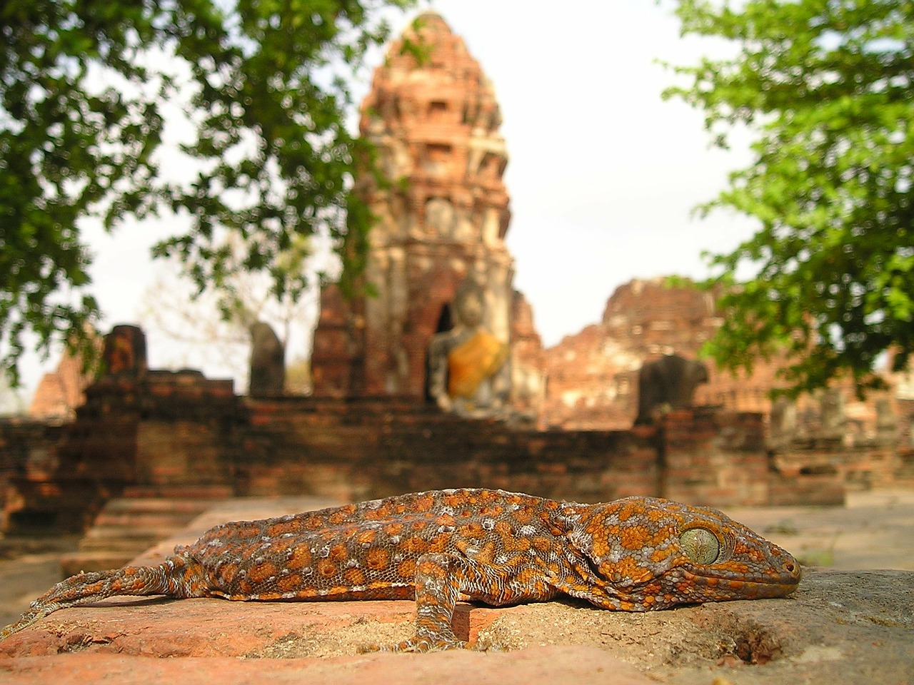 lizard,reptile,temple,buddhism,iguana,dragon,thailand,southeast,asia,so,laos,cambodia,wat,free pictures, free photos, free images, royalty free, free illustrations, public domain
