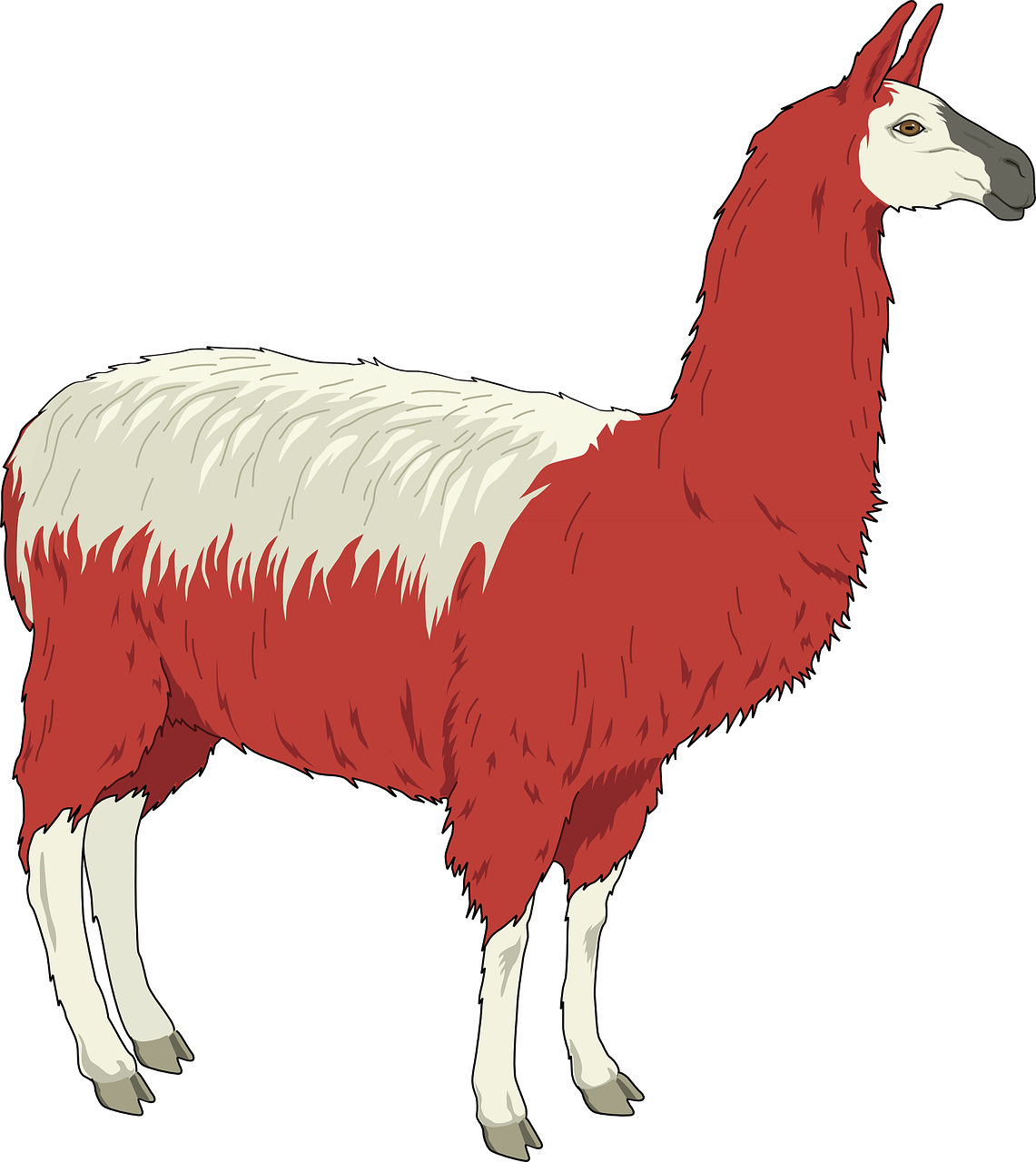 llama shaggy red free photo
