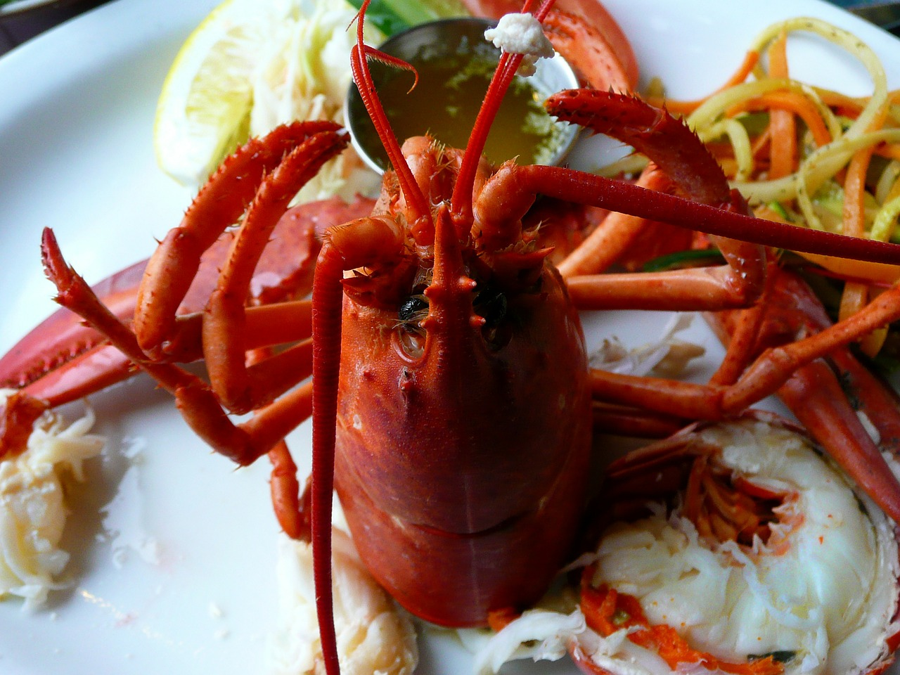lobster cooked seafood free photo