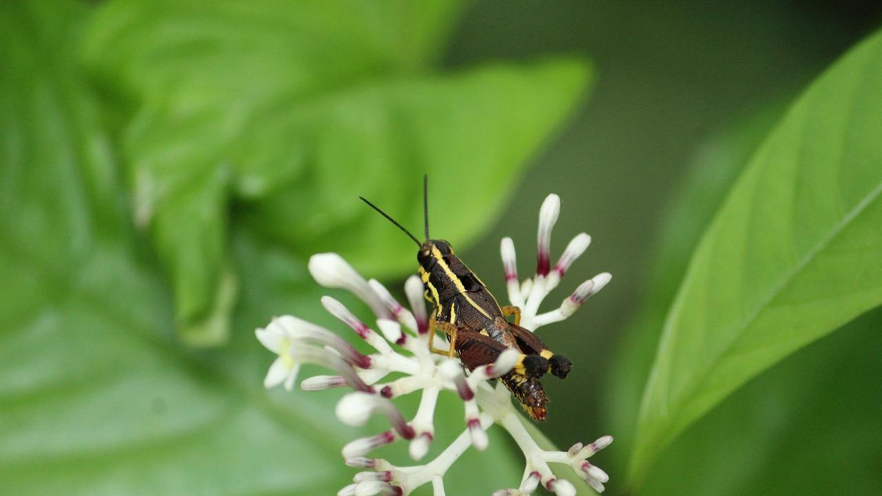 Black locust pics, amateur tied busty free pics