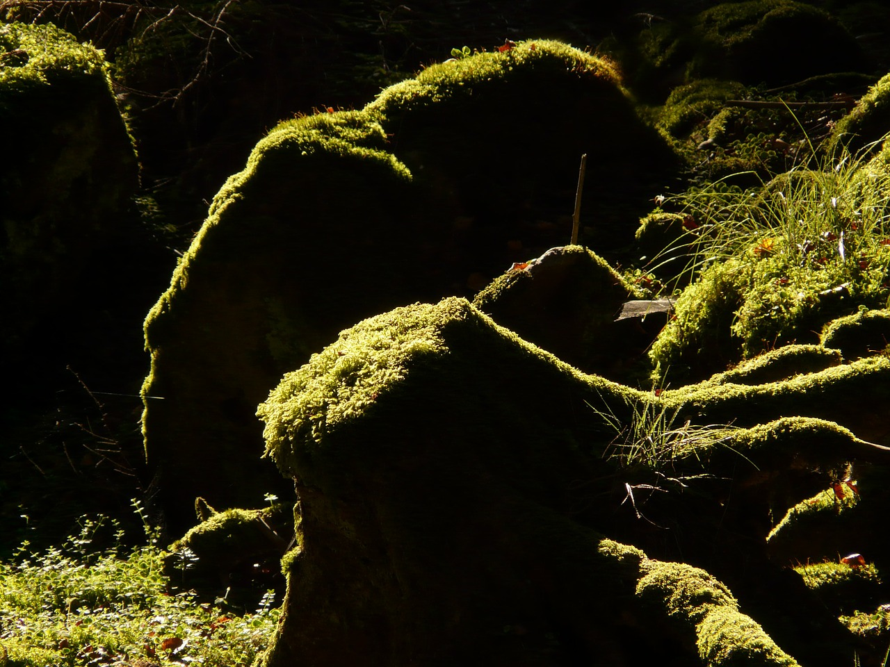 log root forest free photo