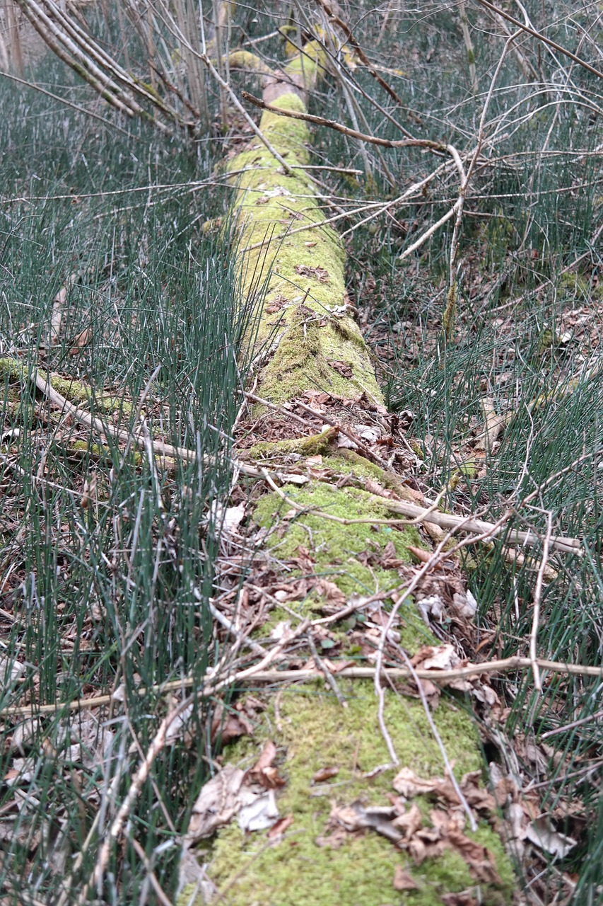 log forest moss free photo