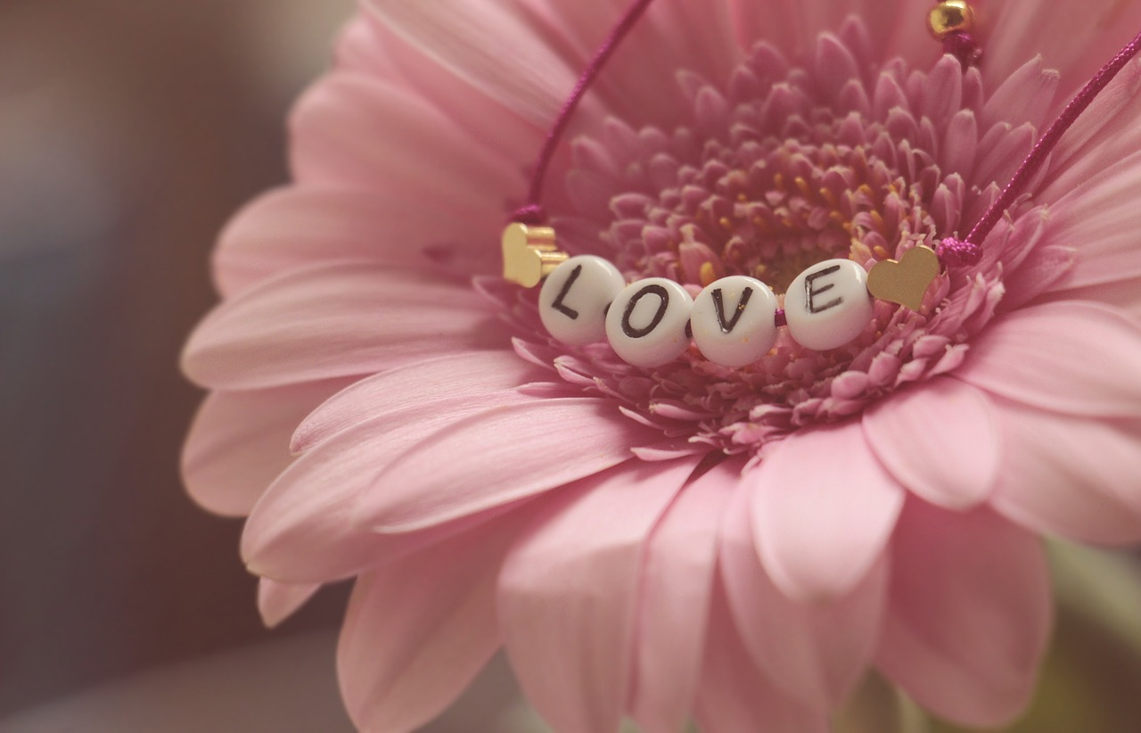 love  bracelet  gerbera free photo