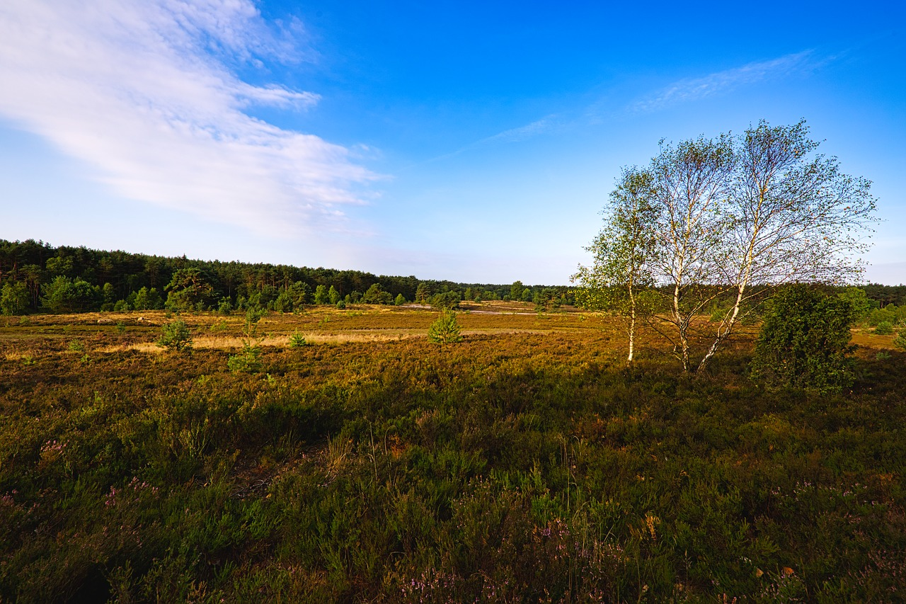 lüneburg heath  landscape  heathland free photo