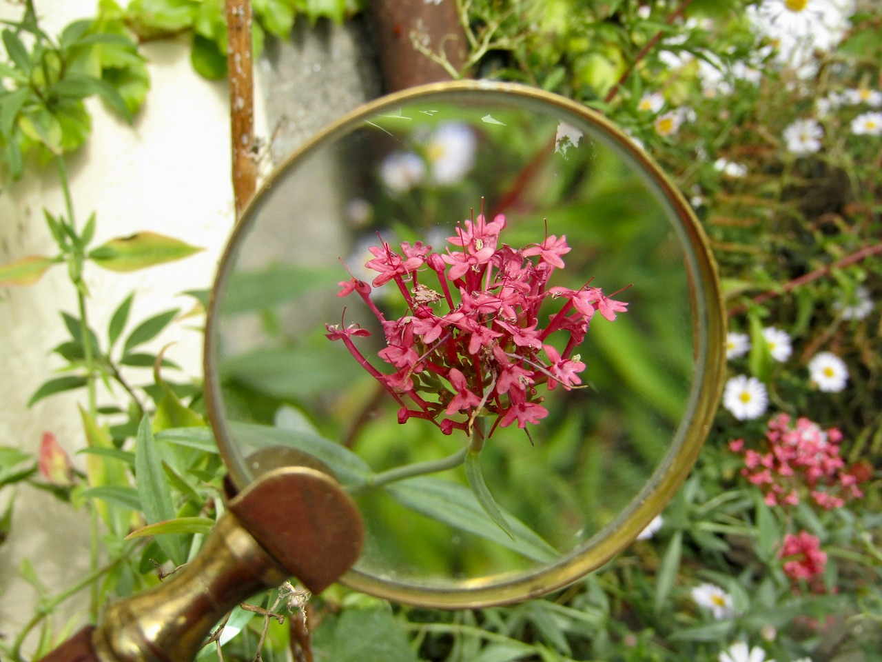 magnifying glass  flower  macro free photo