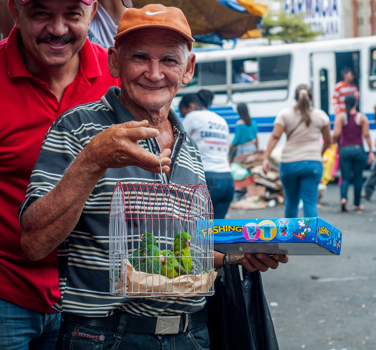 man selling parrots free photo