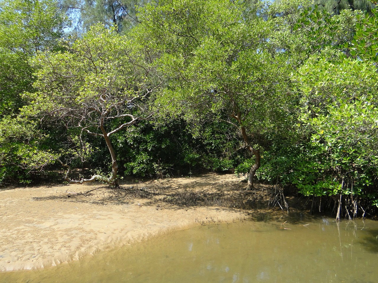 mangrove species tidal forest free photo