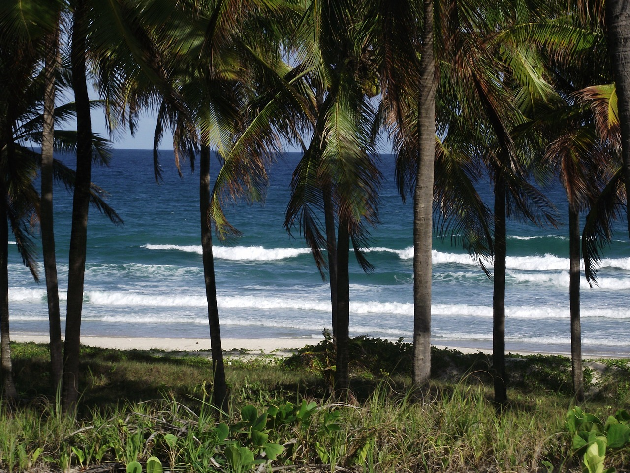 mar coconut trees costa free photo