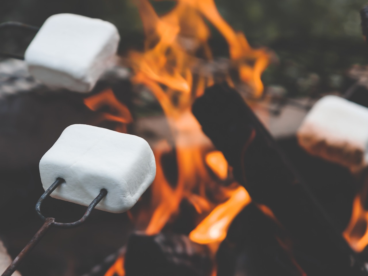 marshmallow,marshmallows,campfire,roasting,summer,evening,finnish,summer evening,high summer,midsummer,yötönyö,fire,burn,free pictures, free photos, free images, royalty free, free illustrations, public domain
