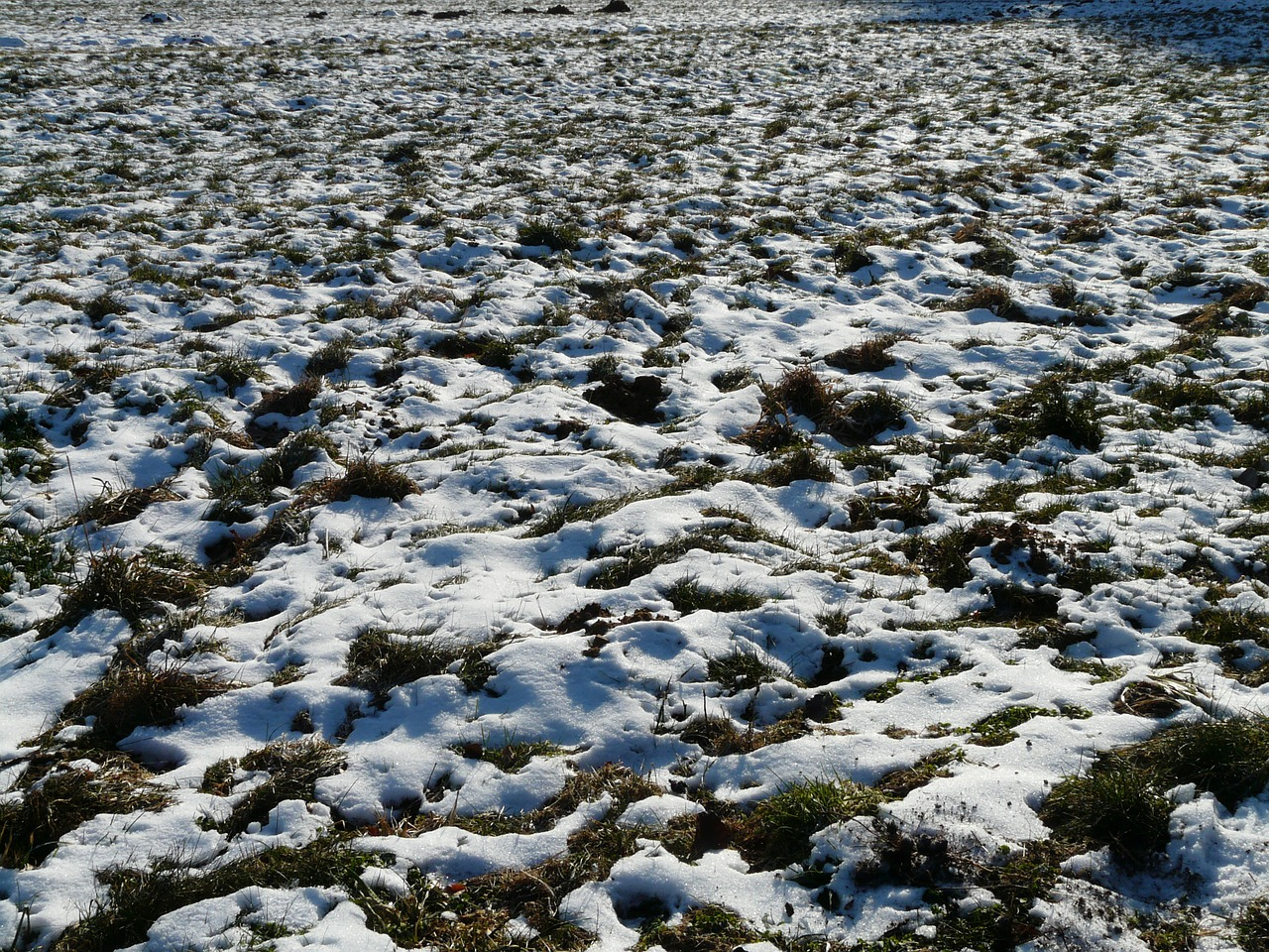 meadow field snowy free photo